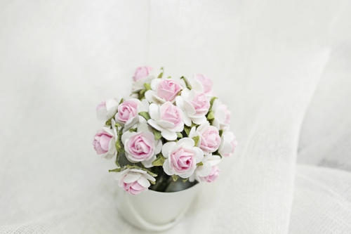 Розы 10 мм, белые c розовым 10шт.